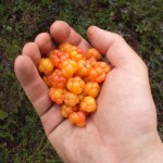 cloudberries2