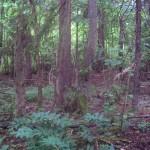 deltaswamp