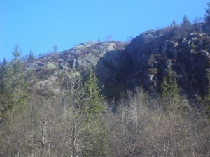 mountainforest3