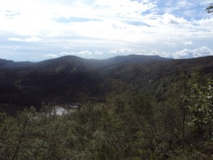 mountainforest5