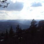 mountainforest2