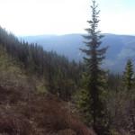 mountainforest4