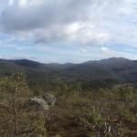 mountainforest6